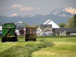Cutting grass and the Canadian mountains to the north