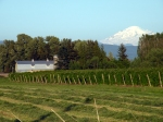 A berry farm and Mount Baker